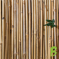 Bamboe Balkonscherm Maken